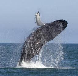 Groenland - Noorderlicht, walvissen en fantastische vergezichten.