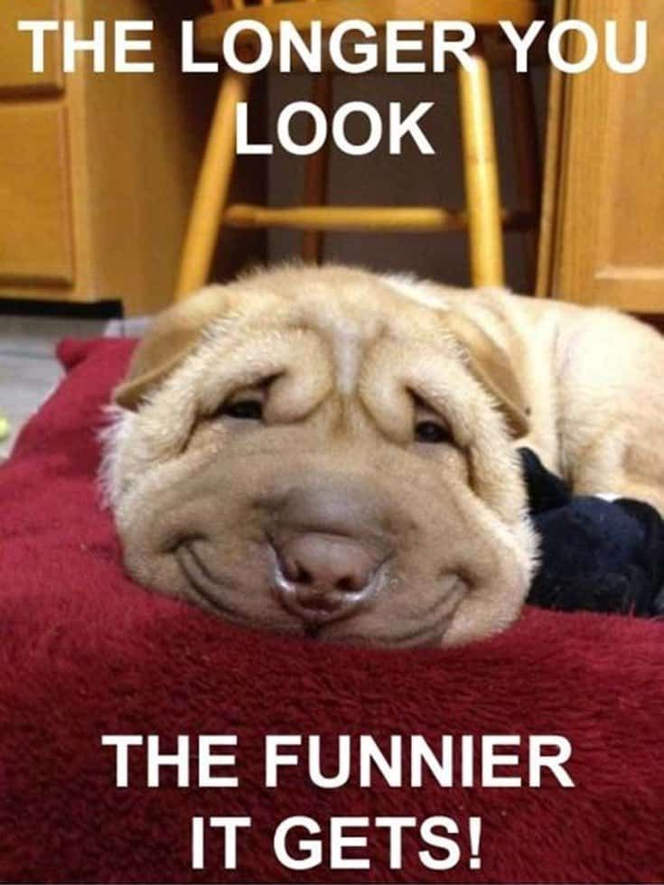27 Funny Pictures To Make Someone Laugh Extremely 22 Puppies Funny Funny Dog Memes Dog Quotes Funny