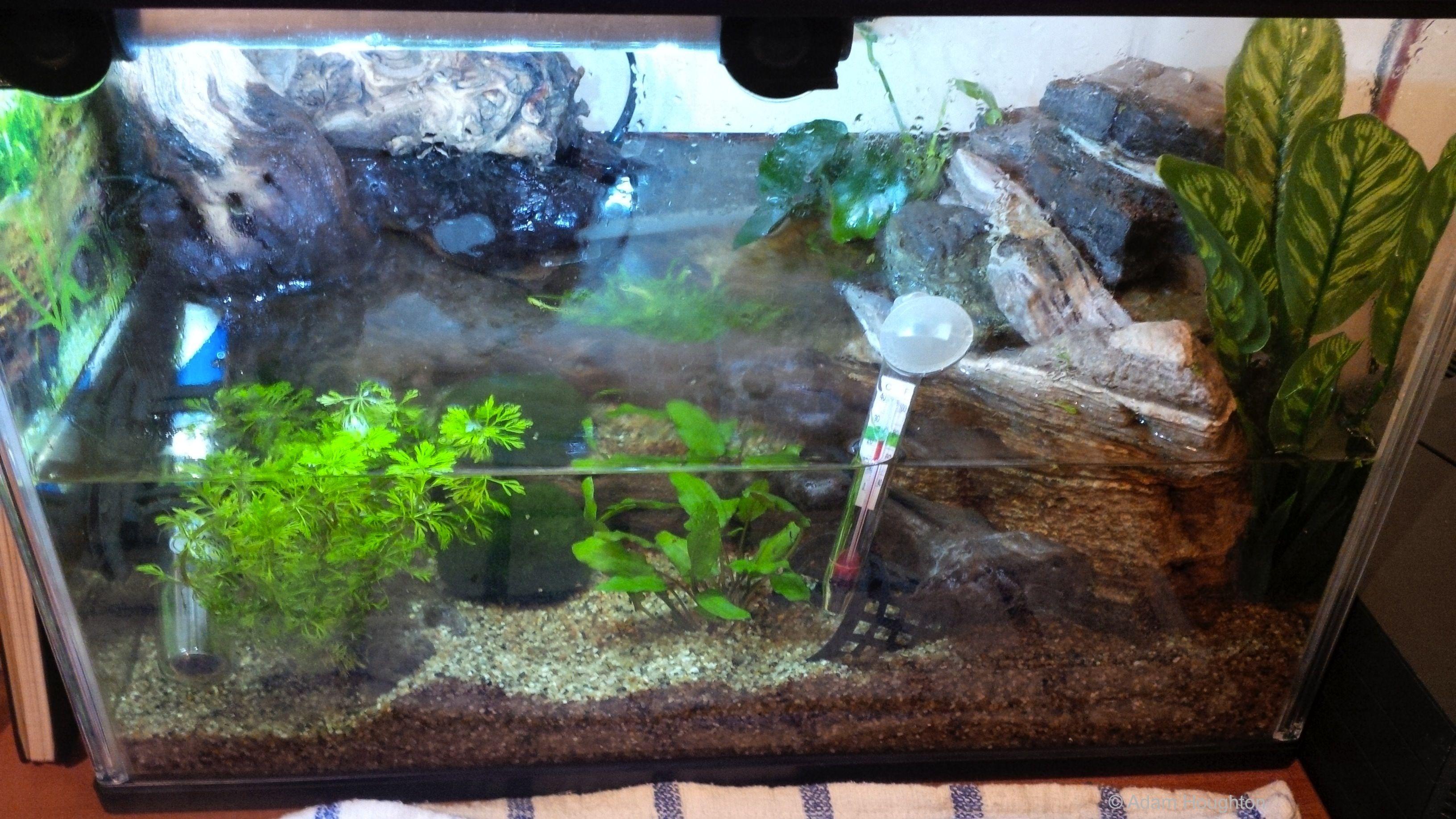 My 23l half filled aquarium or paludarium housing my vampire crab