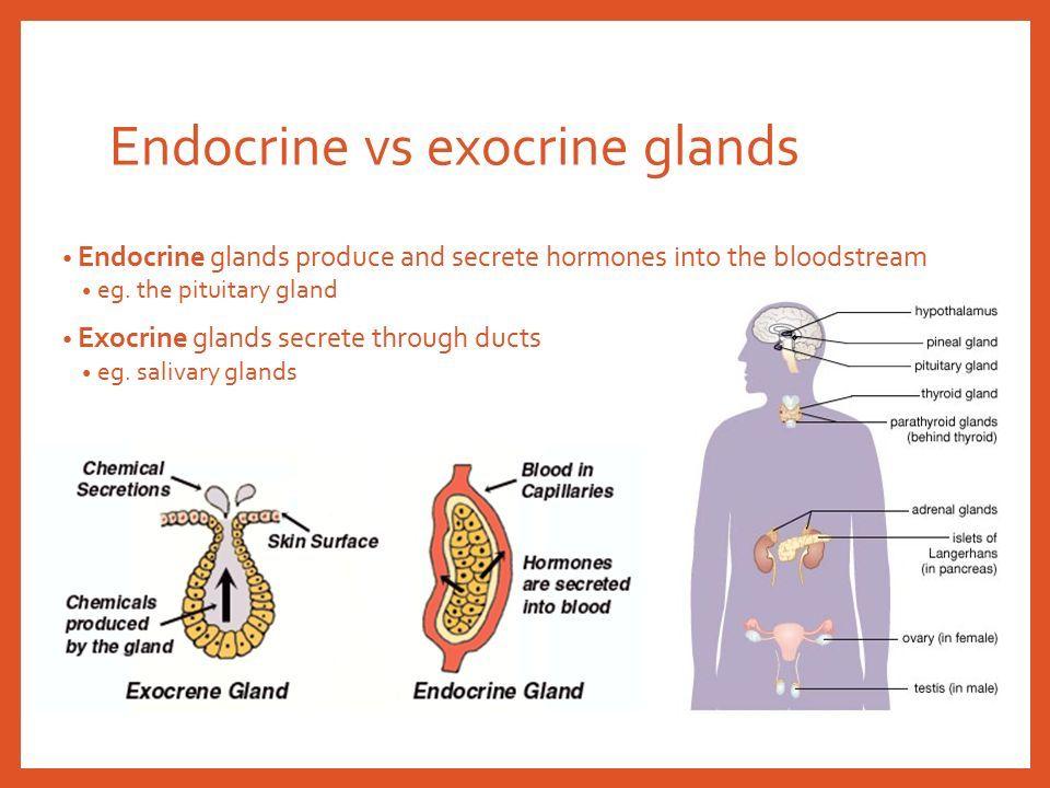 Slide2g 960720 Systems Endocrine Pinterest