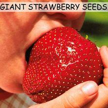 Semillas de frutos 200 unids Súper Gigante Fresa perfume bonsai fresa fruta, inicio jardinería BRICOLAJE
