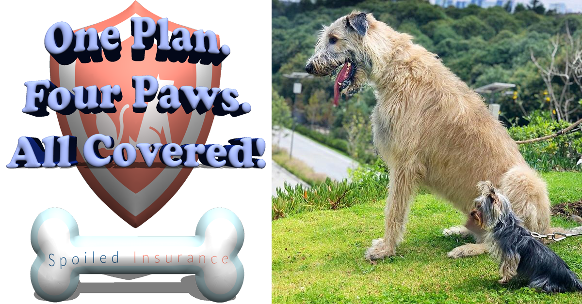 Spoiledinsurance Thank You Bron Thedog Healthypawspetinsurance