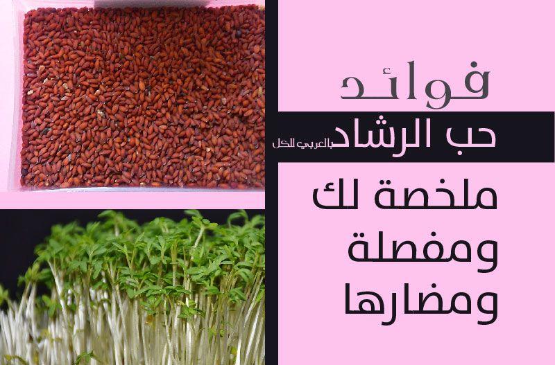 فوائد حب الرشاد ملخصة لك ومفصلة 2020 جديدة ومضارها بـ العربي Herbs Dill