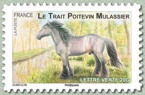 Poitevin (Equus ferus caballus)