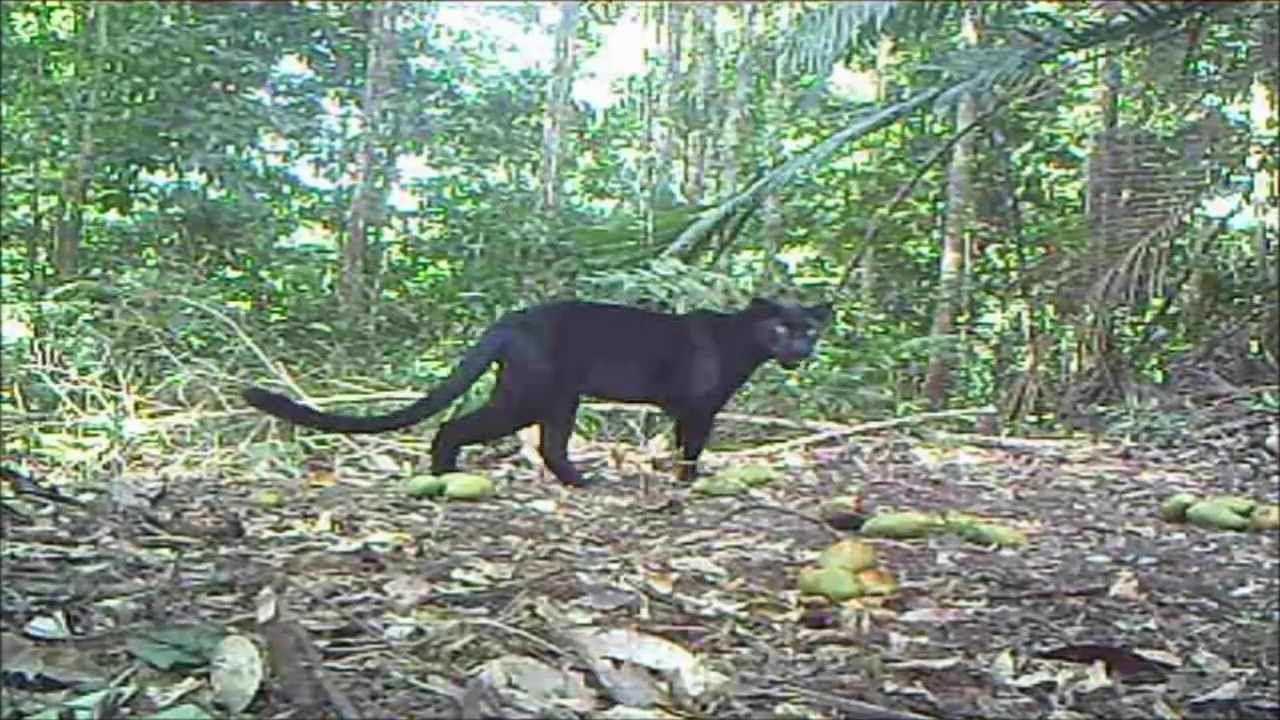 Kenyir Wildlife Corridor (2013) Wildlife, Habitats