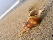 seashells - Google Search