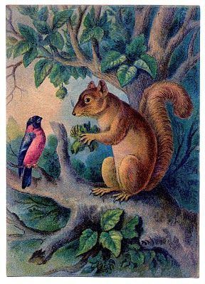 Vintage Clip Art Image - Sweet Squirrel with Bird - The Graphics Fairy
