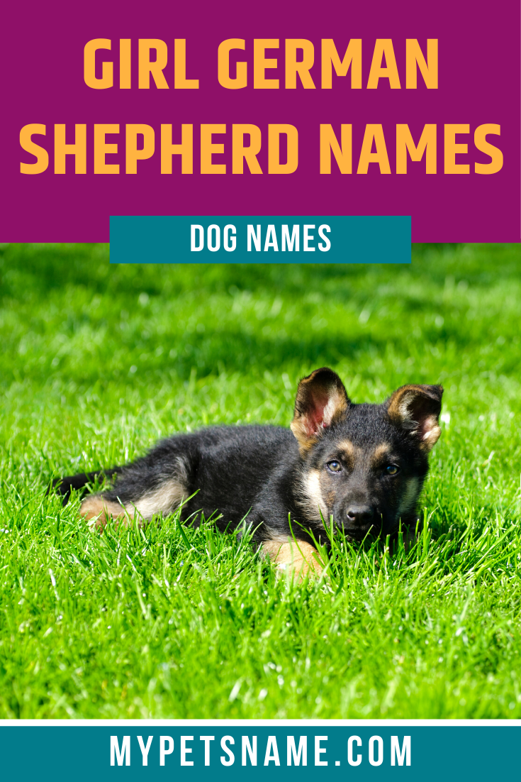 Girl German Shepherd Names In 2020 German Shepherd Names Female German Shepherd Girl Pet Names