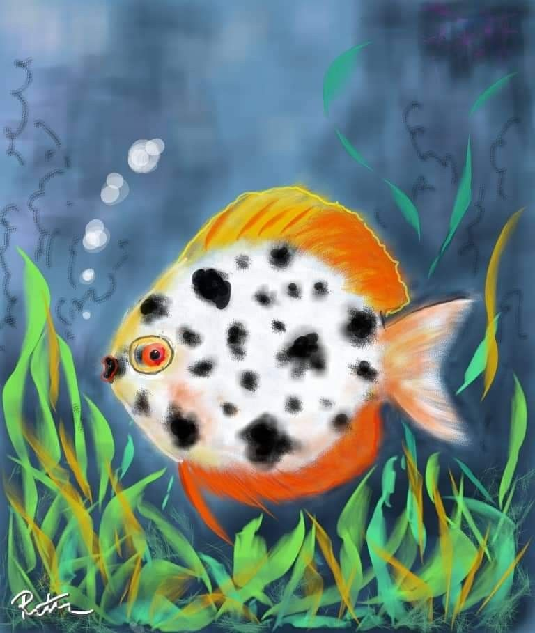 Pin By Shanklinpetstores On Just Neat Stuff In 2020 Pets Fish