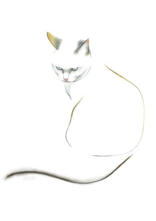 buy blue eyed cat pencil drawing by kellas campbell on artfinder discover