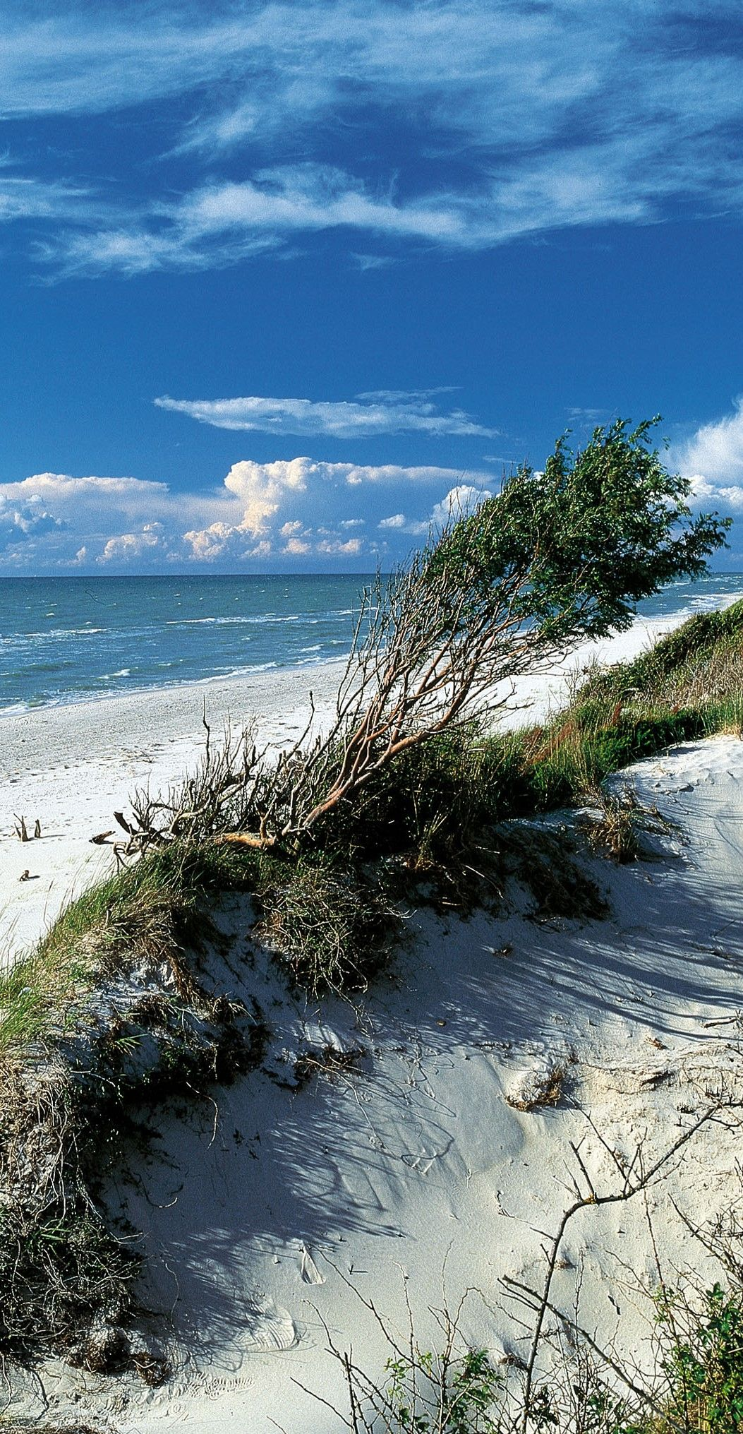 Düne am Darßer Weststrand (Ostsee) #baltic