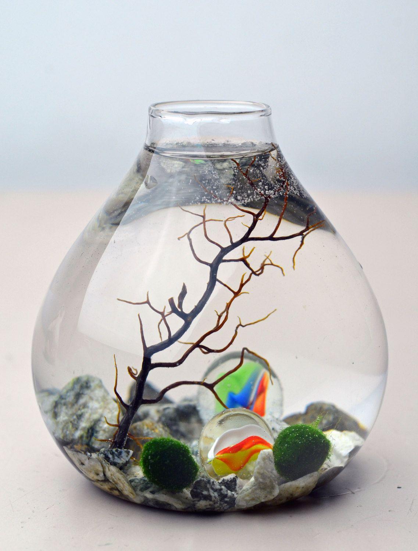 Marimo aquatic terrarium japanese moss ball by for Betta fish moss ball