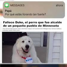 Perro Llorando Meme Busqueda De Google Dogs Animals
