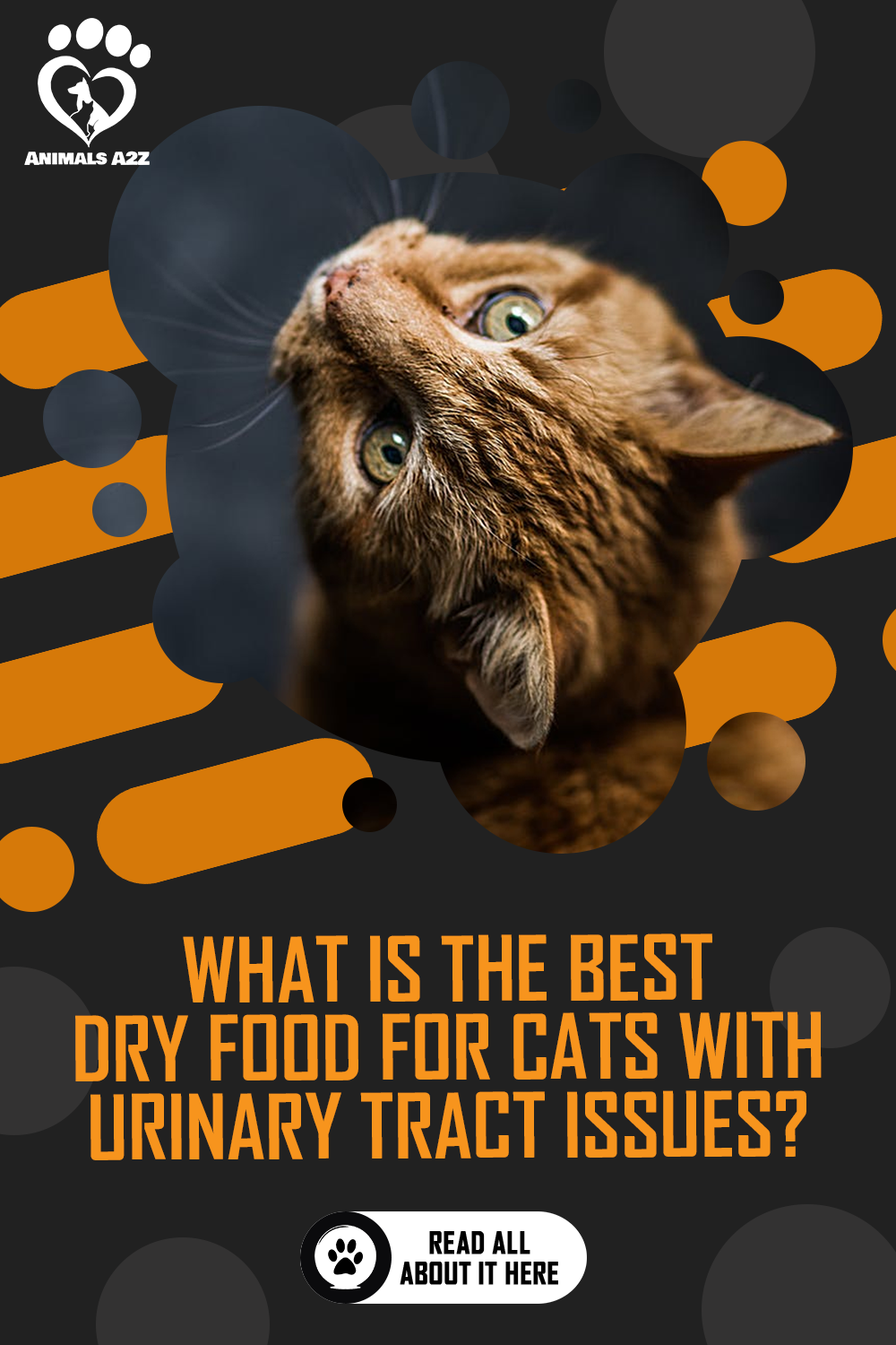 What Is the Best Dry Food for Cats with Urinary Tract