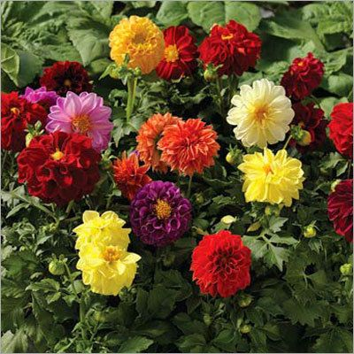 Fresco Fresco Manufacturer Supplier Pune India Flower Garden Plants Plants Colorful Garden