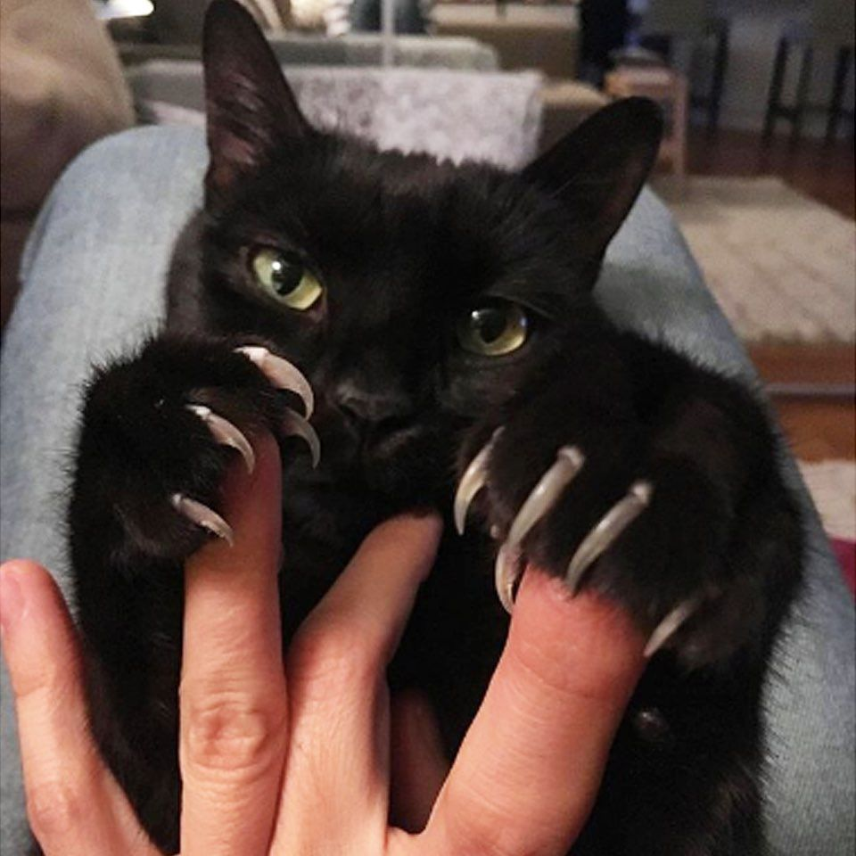 Comment Below If Your Pet Is Overdue A Groom And Trim Ig Kata Ivan Blackcat Cat Kitten Claws Petswithclaws In 2020 Cats Pet Day Cat Pics
