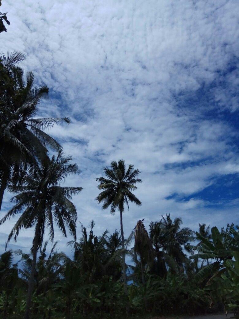 Download 980 Koleksi Background Alam Siluet Paling Keren