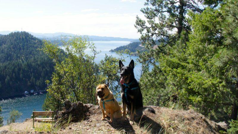 Pet Friendly Weekend in Coeur d'Alene, Idaho Hiking dogs