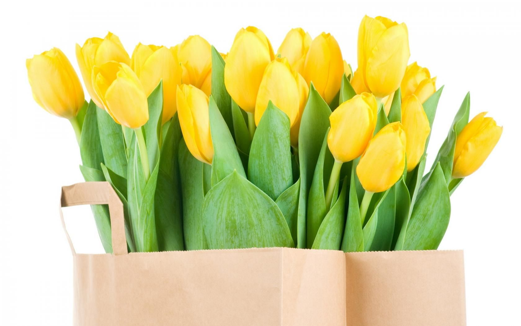 Yellow Tulip Means Cheerfulness Yellow Colour Is Freshness