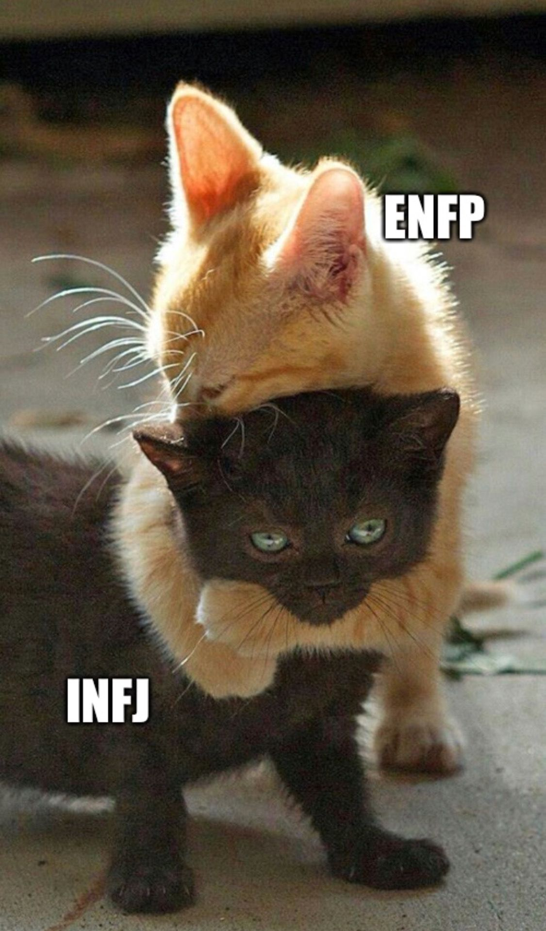 I love having ENFPs in my life ️ Cute cats, Kittens