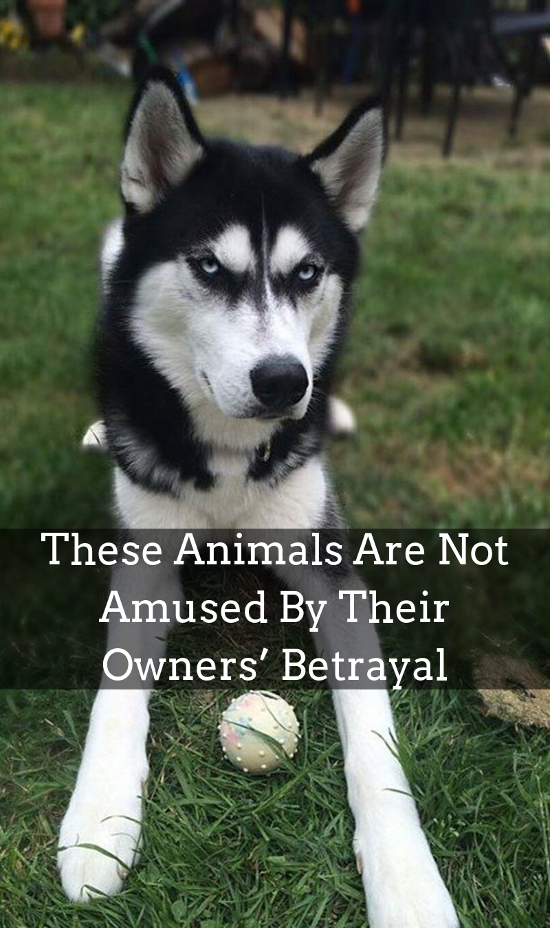 These Animals Are Not Amused By Their Owners Betrayal Animals