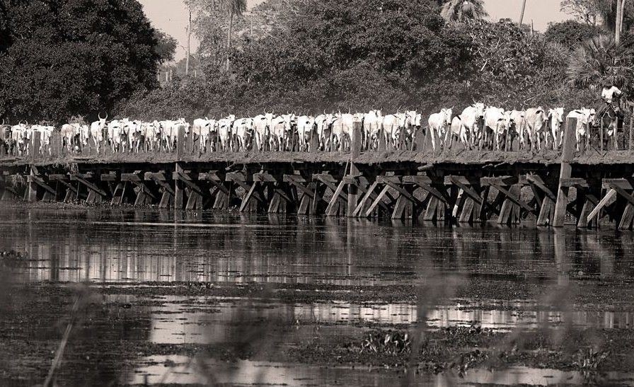 Caiman Eco Reserve