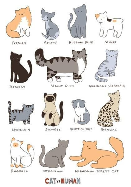 Cute Cat Breed Chart