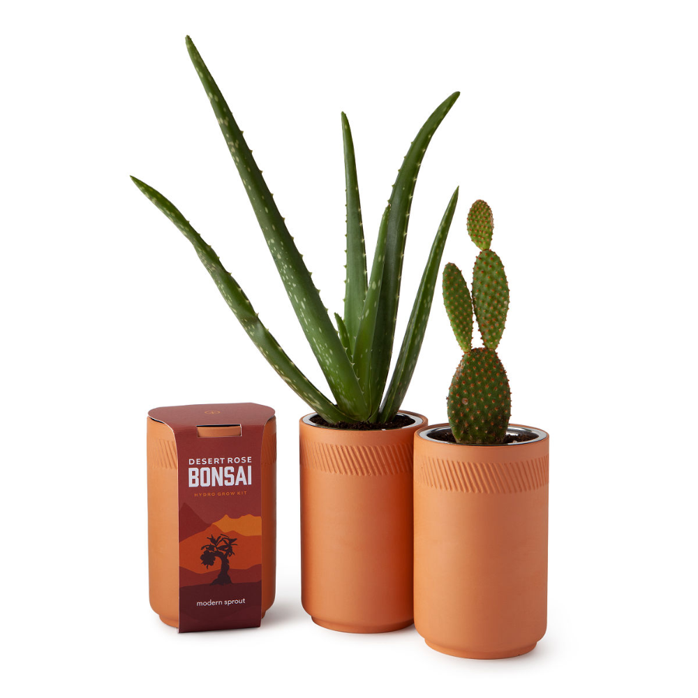 Grow Desert Houseplants From Seeds In Stylish Self Watering Terracotta Containers Available Plants Include Prickly Grow Kit Gardening Kits Flower Pot Design