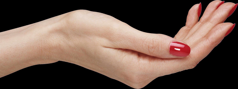 Download Palm Hands Png Hand Image Png Image Pngimg Telapak Tangan Png Tangan