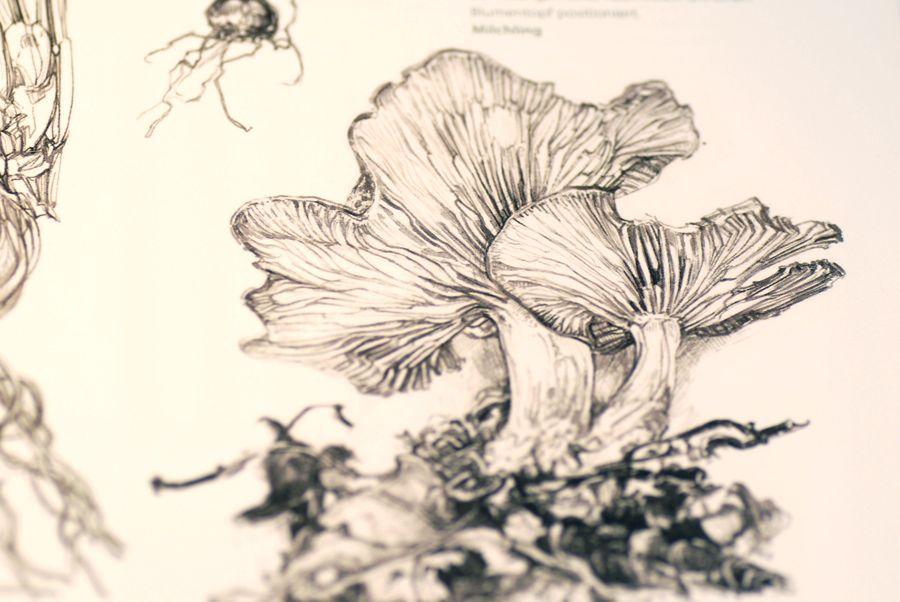 Botany for the Artist Sarah Simblet   proyecto   Pinterest   Dibujo