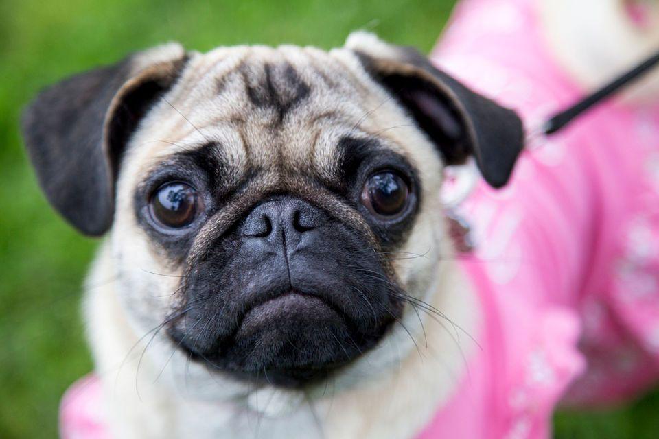 The Best Dog Gps Tracker Gps Tracker Pet Gps Tracker Dog Stuff