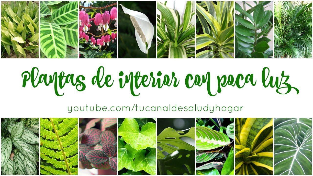 Plantas de interior con poca luz plantas de sombra for Plantas de interior con poca luz