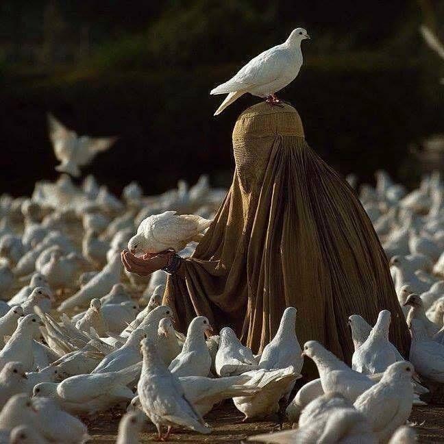 Portugal : Fotografia