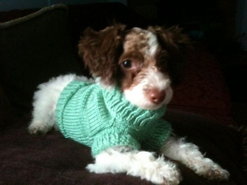 Dog Sweater I Knit For My Nieces Dog I Found The Pattern On Ravelry