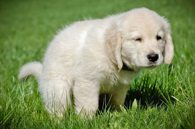 Housebreaking Your Dog Step By Step Process Brandon Mcmillan Dog Trainer Canine Minded Dog Training Obedience Dog Training Puppies