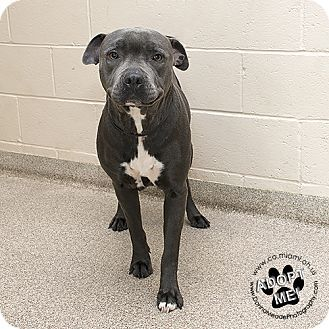 Pin On Shelter Rescue Animals