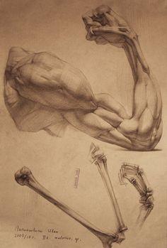 Trazos, referencias de anatomia