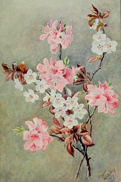 Vintage Chinese Cherry Blossoms Flowers Botanical Print Restored Floral Illustration Digital Image Graphic Instant Download Chine Japon Asie