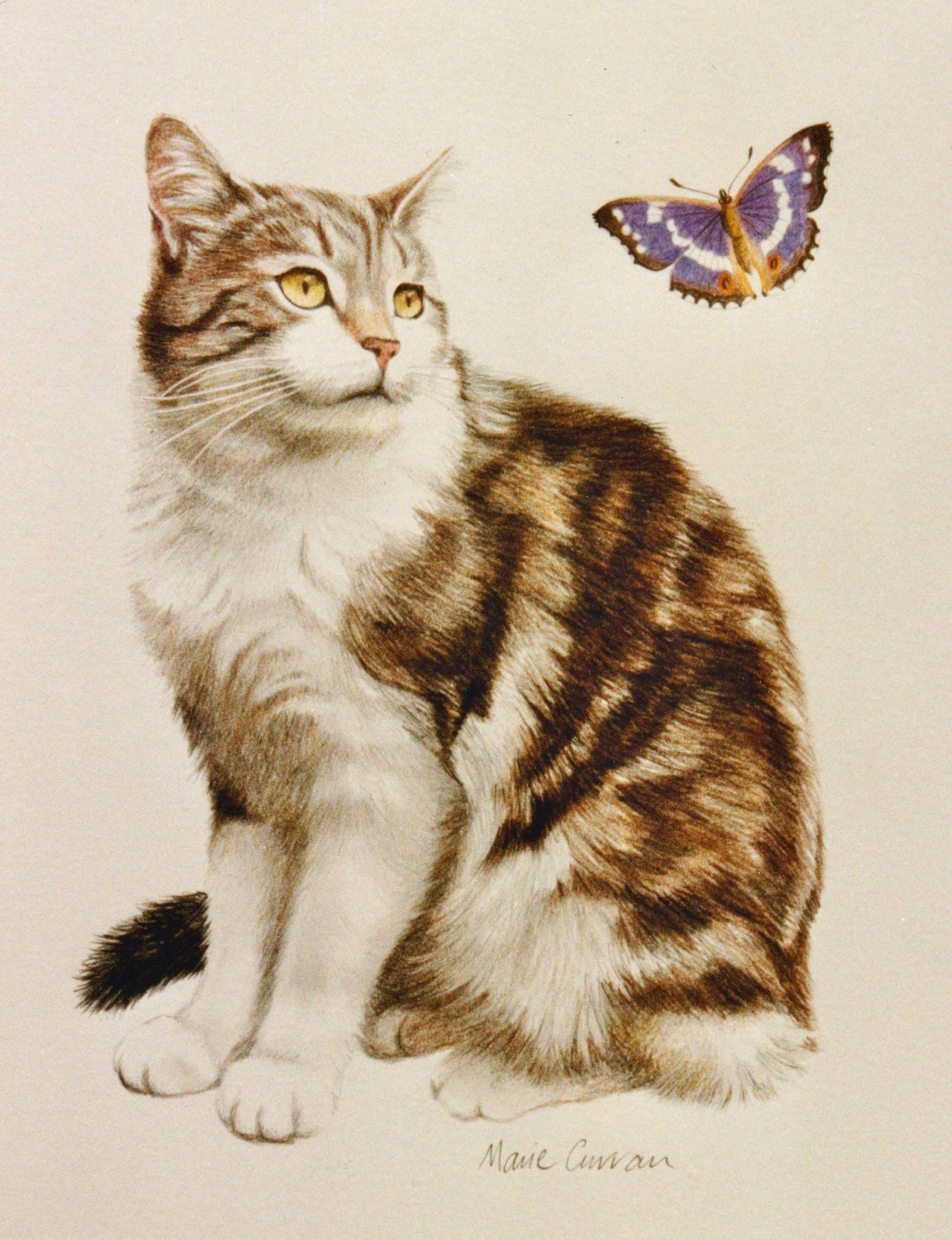 Purple Emperor Tabby Cat With A Purple Emperor Butterfly Colour Pencil Drawing Cat Art Color Pencil Drawing Drawings