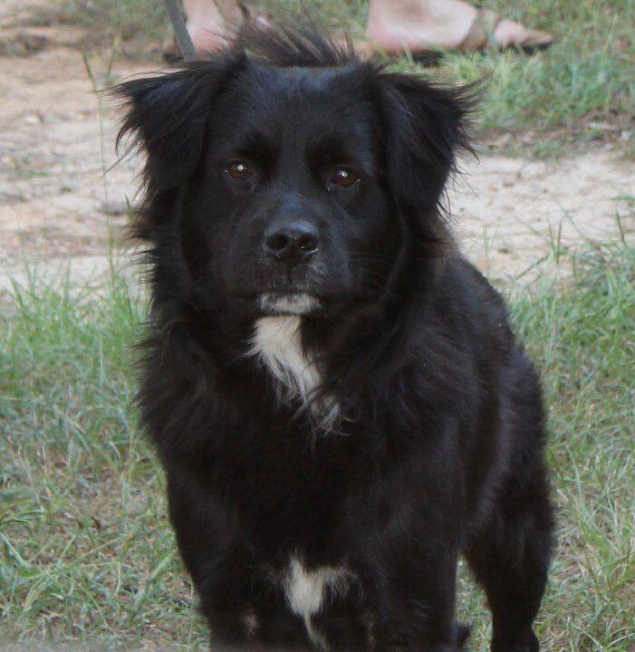 Lostdog 10 27 15 Dawsonville Ga Mix Black And White Intact Male 4 7 Years Old 76 100 Lbs Black Long Hair Bill Whi Losing A Dog Black And White Dog Black Dog