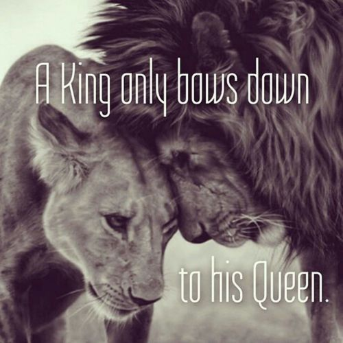 Citaten Love Queen : Lions and lionesses are filled with love & might and represent