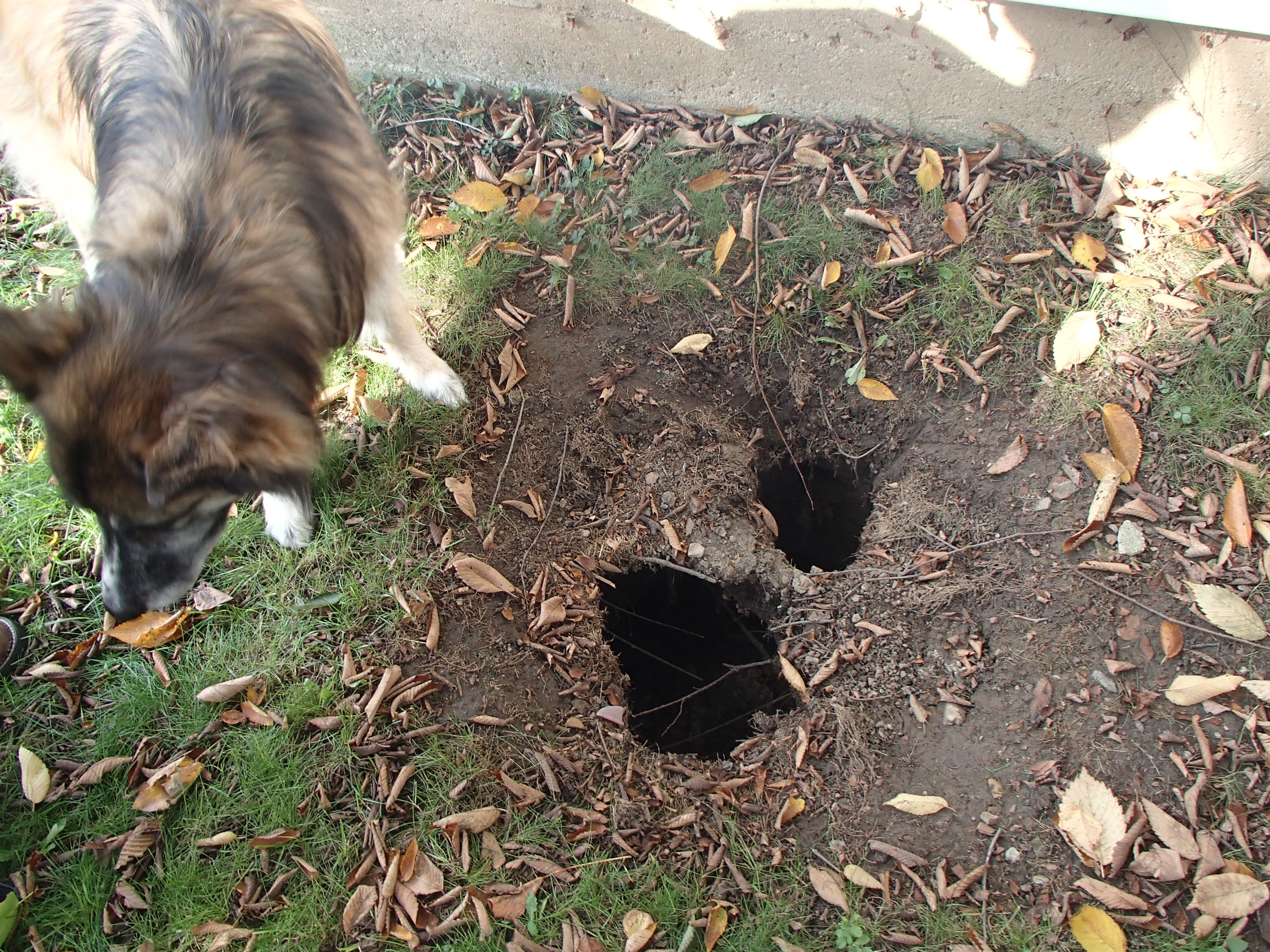 The Short Version Is, A Sinkhole Opened Up In My Back Yard. More Disturbing