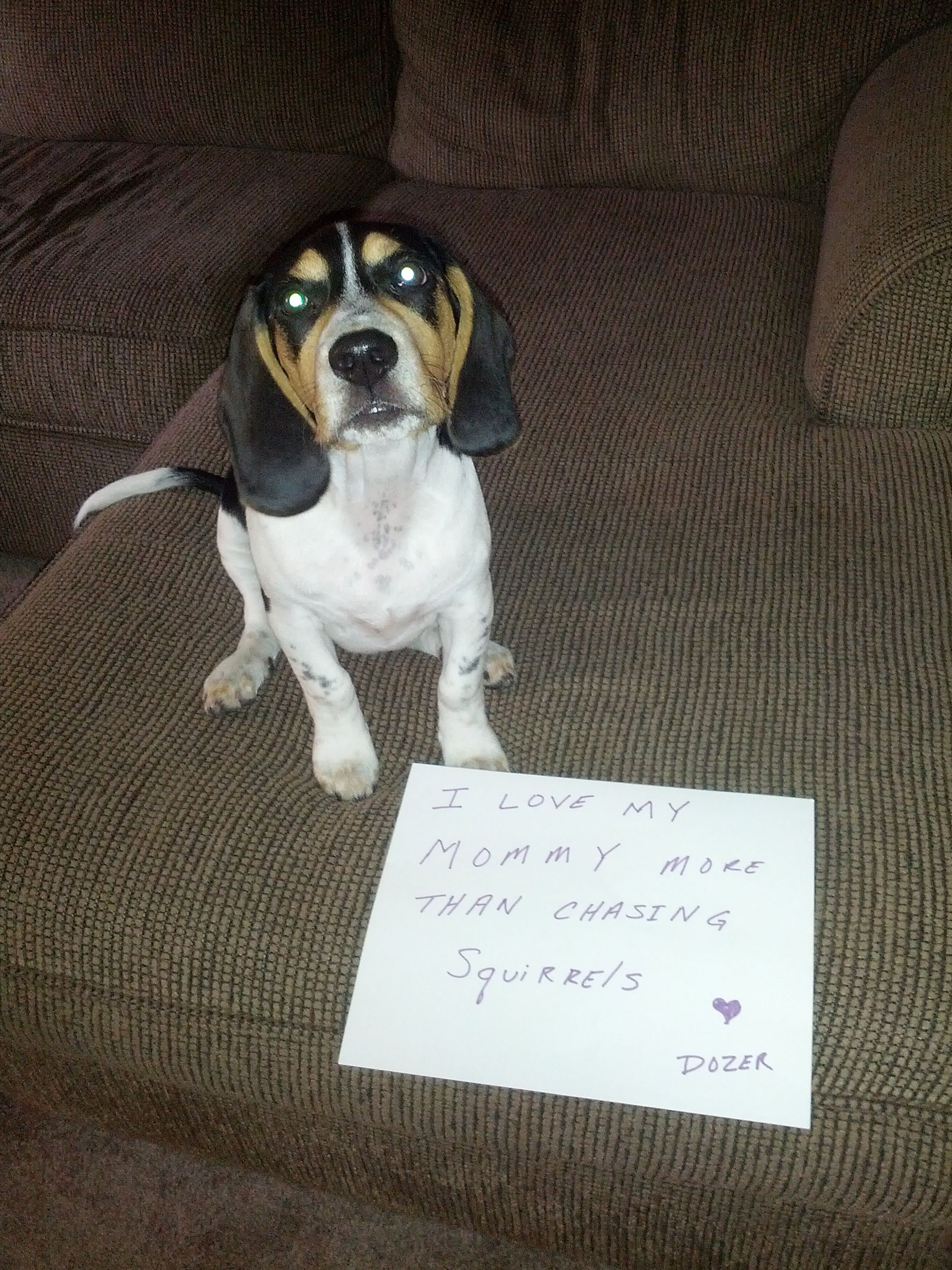 Dozer 39 s lunchtime e mail to mommy beagles pinterest - Chiot beagle gratuit ...