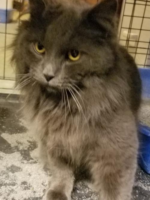 Pin By Misti Kane On Adoption Cat Adoption Pets Kitten Adoption
