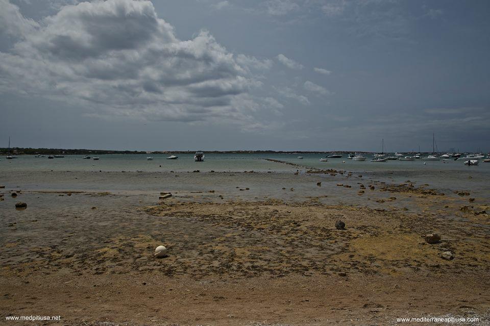 Estany des Peix - Formentera - Mediterránea Pitiusa - La Naviera de Formentera