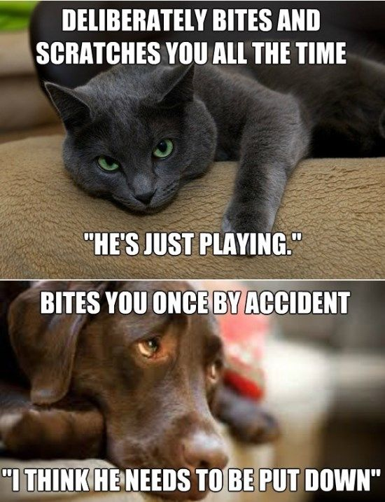 Cats And Dogs Funny Meme And Gif Jpg 550 717 Cat And Dog Memes Cat Quotes Funny Funny Cats And Dogs