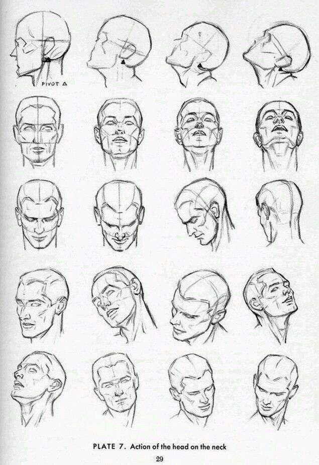 Reference Anime Head Anatomy