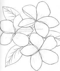 Image Result For Frangipani Flower Outline Flower Drawing