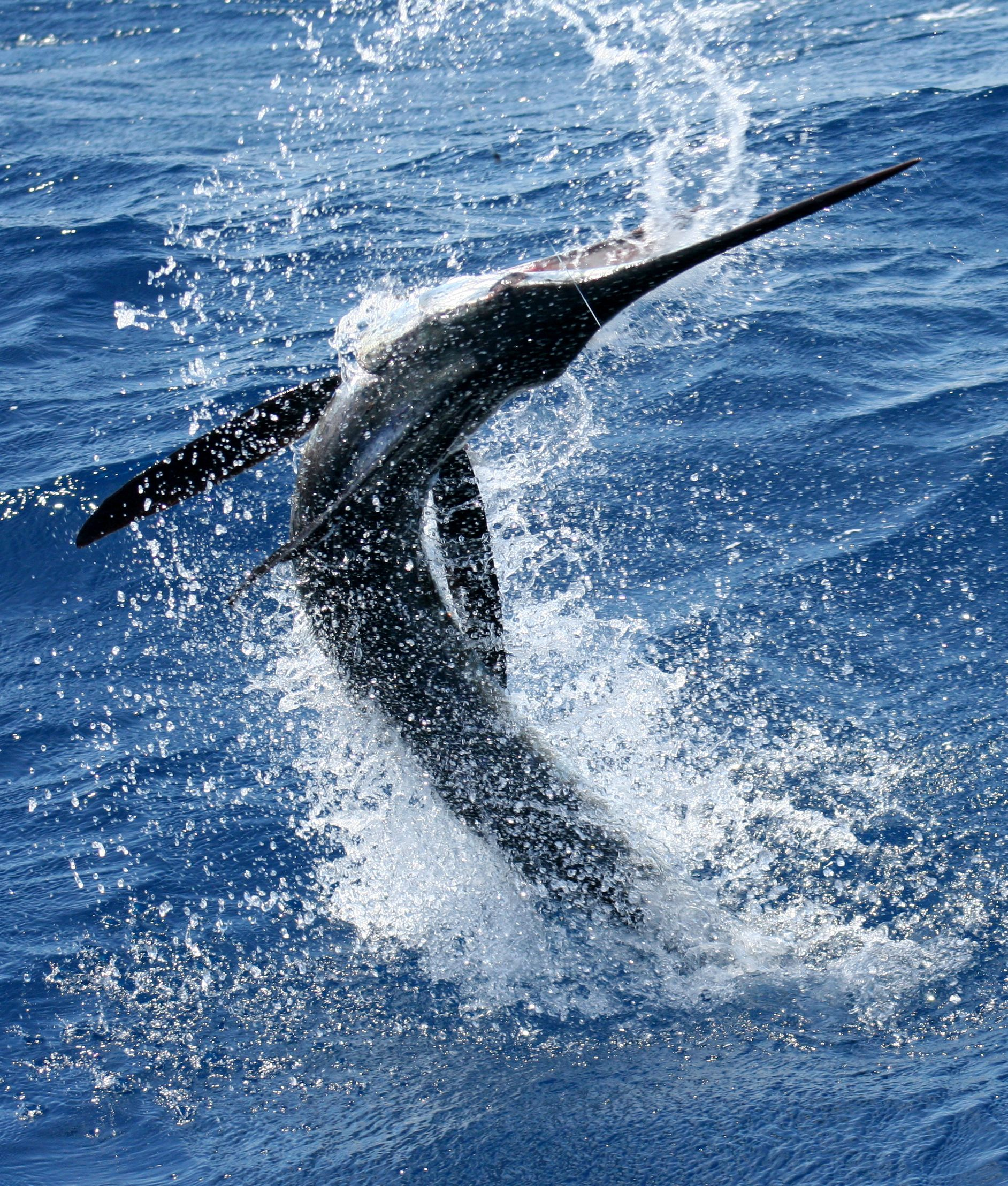 Deep Sea Fishing for Marlin off the coast of Cabo San Lucas