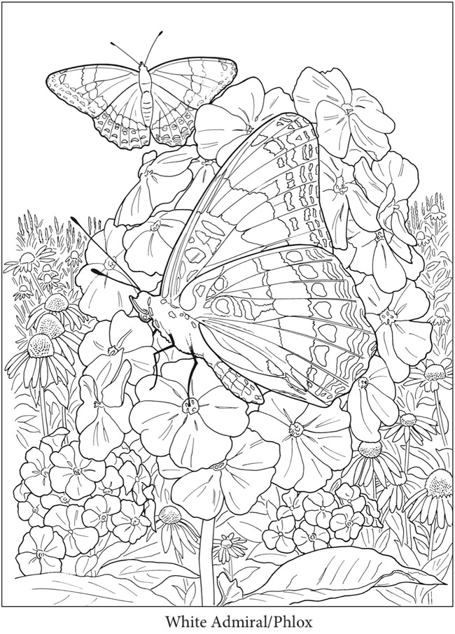 Creative Haven Butterfly Gardens Coloring Book#book # ...
